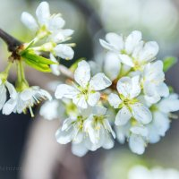 Краски весны. :: Ричард Петров