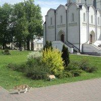 Клумбы при Монастыре в Подмосковном городе Дзержинский :: Ольга Кривых
