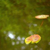 Лепестки водяной Лилии :: Ильгам Кильдеев