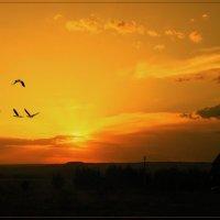Летят перелётные птицы. :: Anatol Livtsov