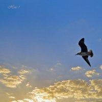 На фоне небес ( смотреть полностью раскрыв ) :: Николай Ярёменко