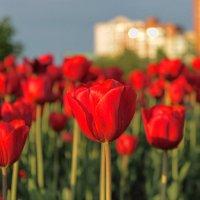 весна в городе :: navalon M