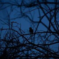 Соловьиная ночь :: Дарья Игитова