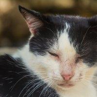 бродячий кот :: Илья Сычев