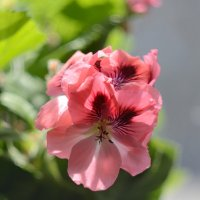 Комнатные цветы :: Anatolyi Usynin