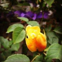 Жизнь в саду.... :: Yelena Sievers