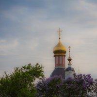 Золотые купола :: Максим Максимов
