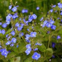 Цветы как бабочки :: Татьяна Ломтева