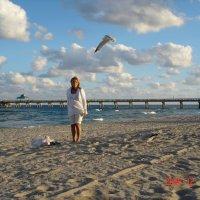 А во Флориде голодные и наглые чайки!! :: Владимир Смольников