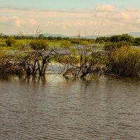 Большая вода :: Александр Перелыгин