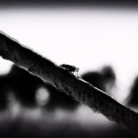 Fly :: Катерина Чебышева