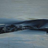 волны реки Луга :: Михаил Жуковский