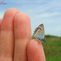 Бабочка :: °•●Елена●•° ♀