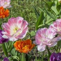 краски весны :: Слава
