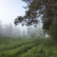 Утро туманное... :: Александр Гурьянов