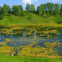 Заросший пруд :: Роман Царев