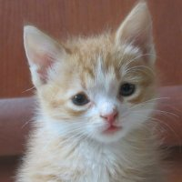 Котёнка :: Людмила