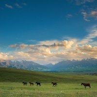 Красивая природа :: Дмитрий Левин