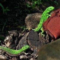 Зеленые, только не человечки... Но вежливые... :: Александр Резуненко
