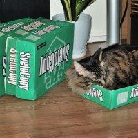 """компания """"SwetoCopy"""" - крупнейший производитель коробок для котов :: Андрей ЕВСЕЕВ"""