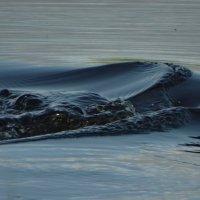 стихия вода :: Михаил Жуковский