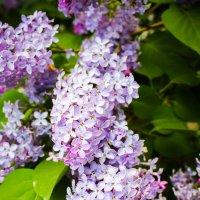 Любимые цветы :: Екатерина Бильдер