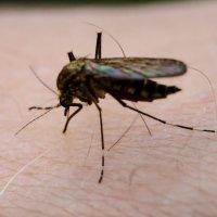 комар на руке :: Андрей Иванов