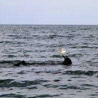 В море всё может случиться!! :: Геннадий Валеев