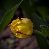 желтый и мохнатый :: gribushko грибушко Николай