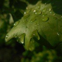 после дождя :: игорь щербина