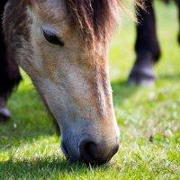 Horse :: Vitaliy Turovskyy