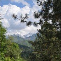 Май в горах. :: Anna Gornostayeva