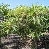 В Ботаническом саду острова Пальма :: Natalia Harries