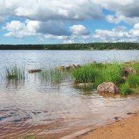 Финский залив :: Grey Bishop