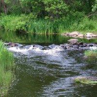 Малая река Великая :: Grey Bishop