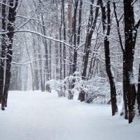 Снегопад в парке :: Денис Масленников