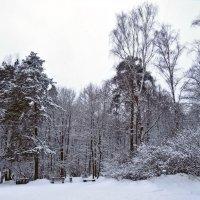 Снежный день :: Денис Масленников