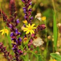 цветочки полевые :: Nataliya Oleinik