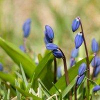 Весна ) :: Дмитрий Дербенев