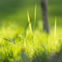 Трава-мурава :: Ольга Князева