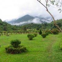 Вьетнам :: Светлана Воронова