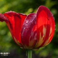 Цветок :: Алексей Обухов