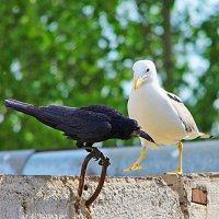 Из жизни птиц. :: TATYANA PODYMA