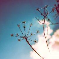 Летняя травка :: Артемий Кошелев