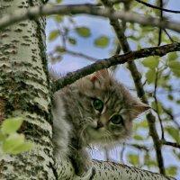 Деревенская соседка у нас на дереве. :: Пётр Сесекин