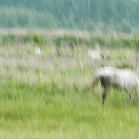 Летний дождь :: Равиль Хакимов