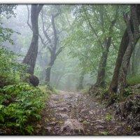 в тумане :: Sergey Bagach