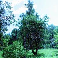 В лесу :: Владимир Немцев