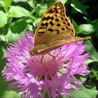 Облюбовала самый красивый цветочек... :: Нина Корешкова