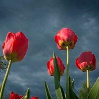 Под весенним небом. :: Андрий Майковский